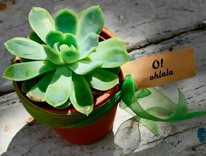 regalos-merchandising-ecologicos-peru